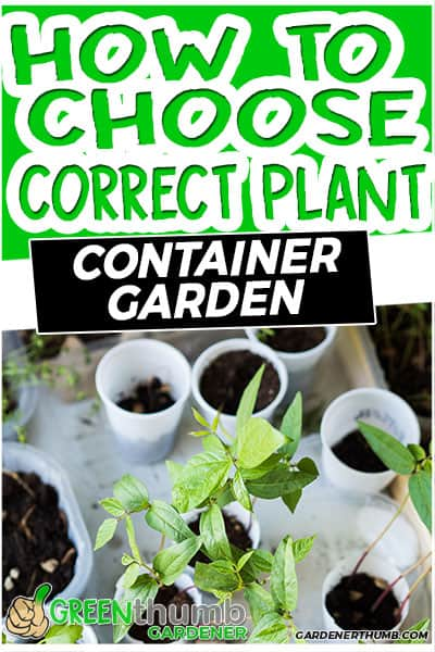how to choose correct plant container garden