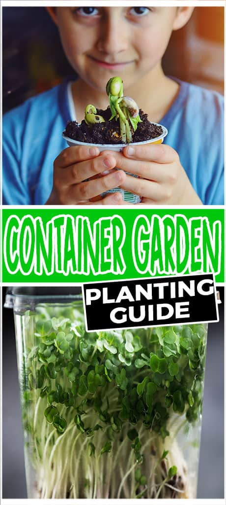 container garden planting guide