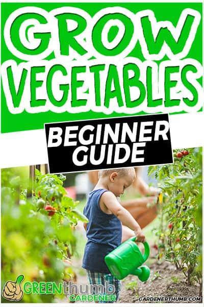grow vegetables beginner guide