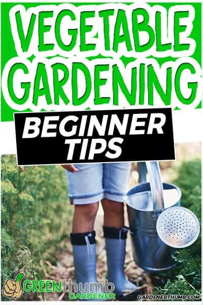 vegetable gardening beginner tips