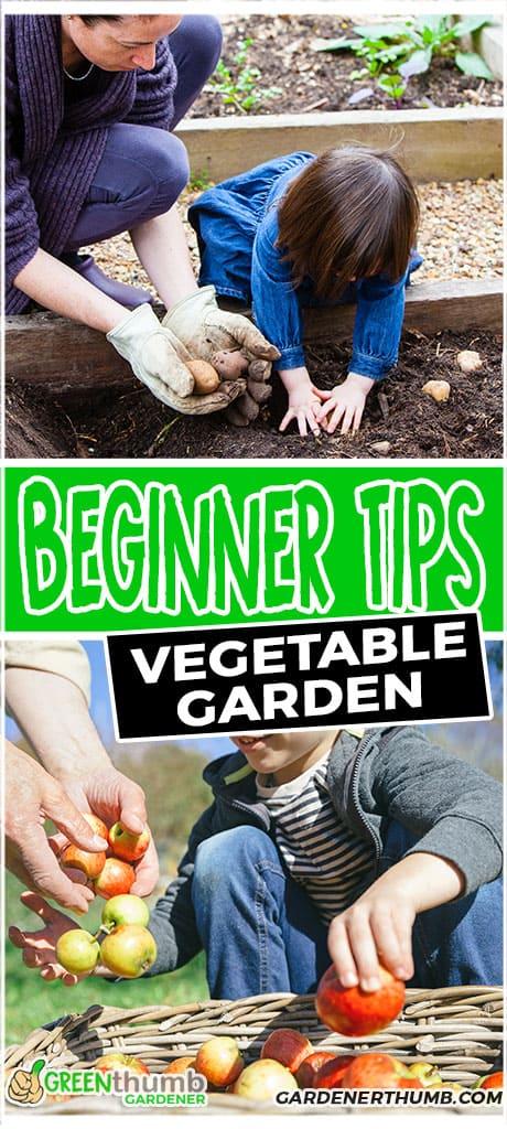 beginner tips vegetable garden