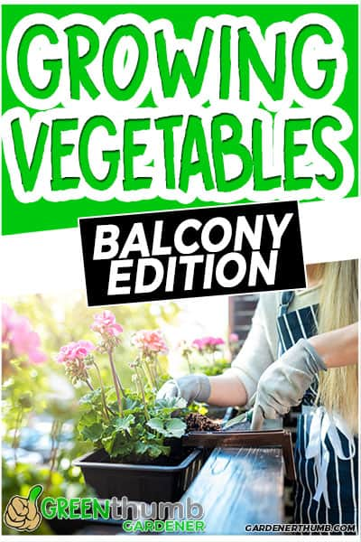 growing vegetables on pots in balcony