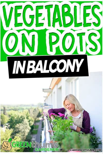 vegetables on pots in balcony