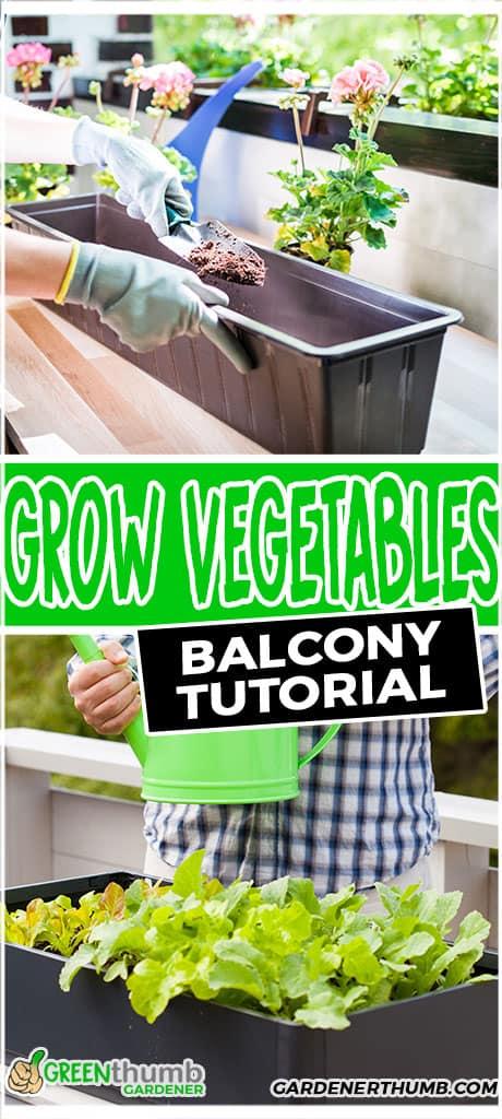 grow vegetables balcony tutorial