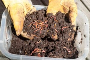 why is vermicomposting important