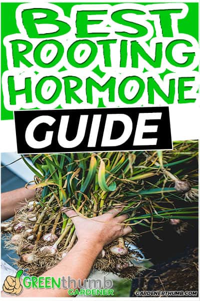 best rooting hormone guide