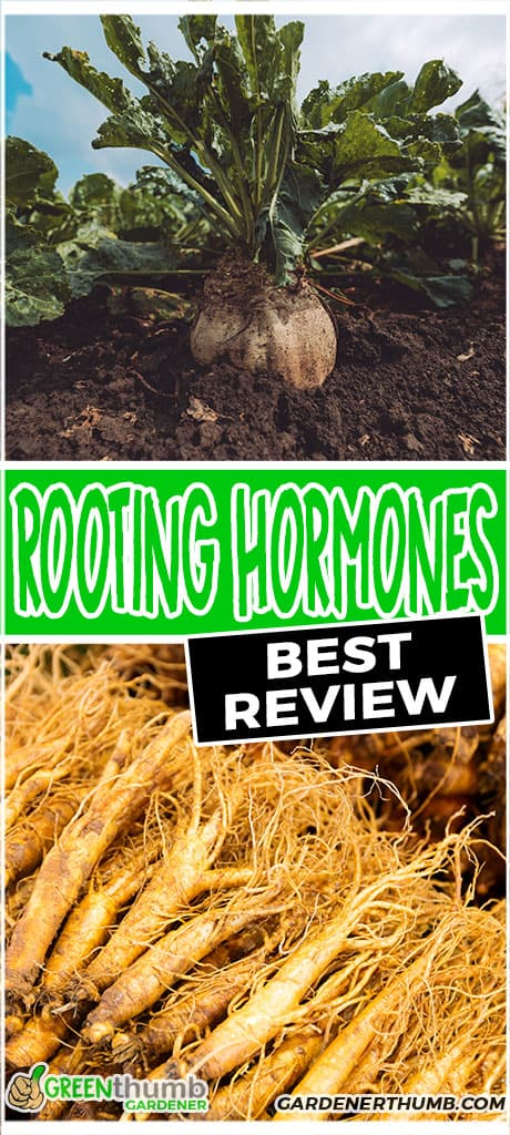 rooting hormones best review
