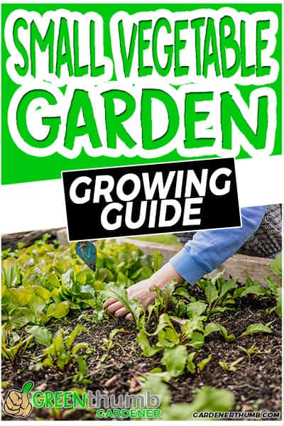 small vegetable garden growing guide
