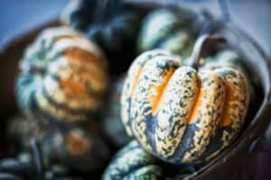 how to tell when acorn squash is ripe