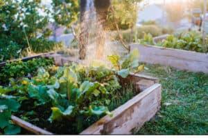 raised bed vegetabke gardening for beginners