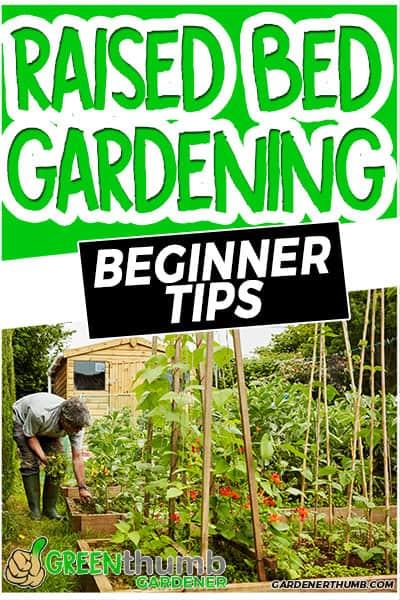 raised bed gardening beginner tips