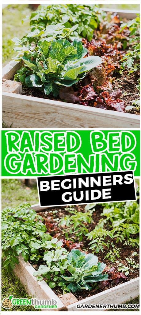 raised bed gardening beginners guide