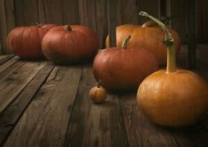 best fertilizers for pumpkin