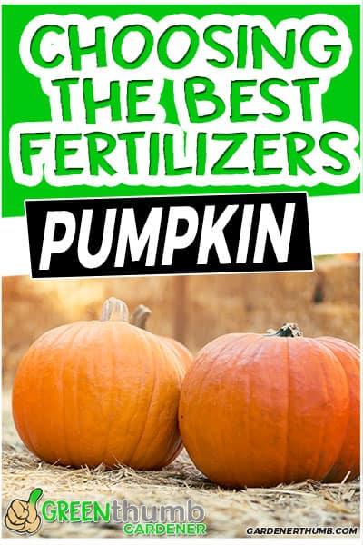 choosing the best fertilizers pumpkin