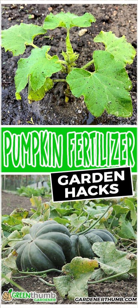pumpkin fertilizer garden hacks