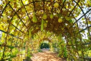 best garden arbor