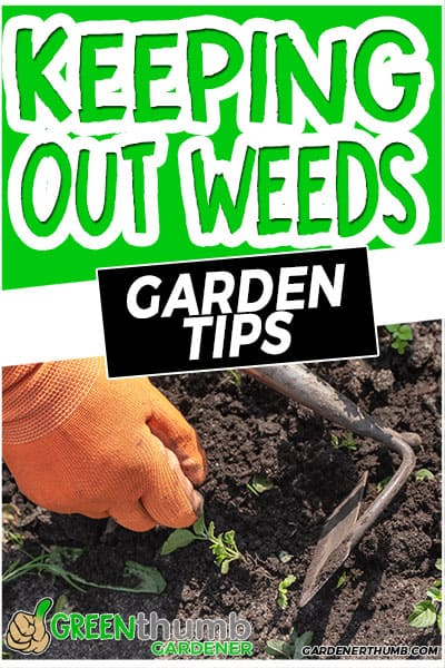 keeping out weeds garden tips