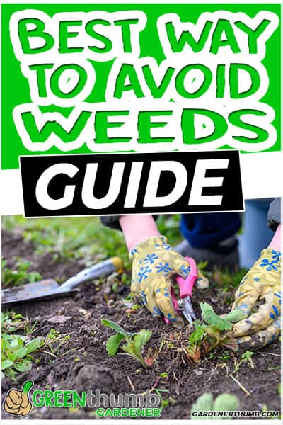 best way to avoid weeds guide