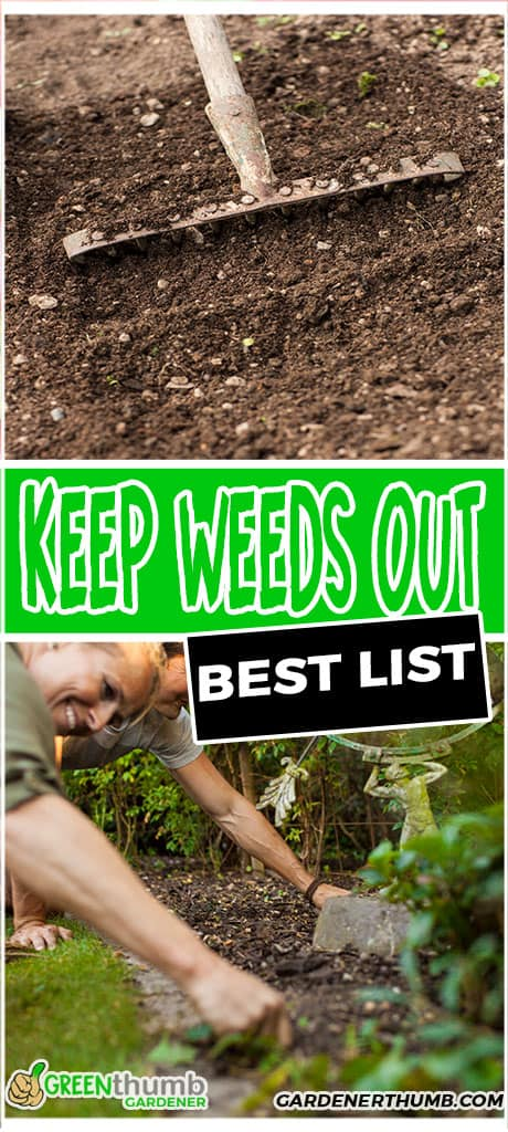 keep weeds out best list