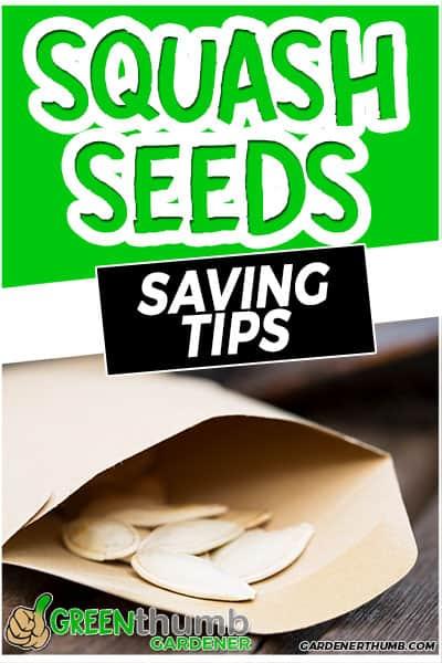 squash seeds saving tips