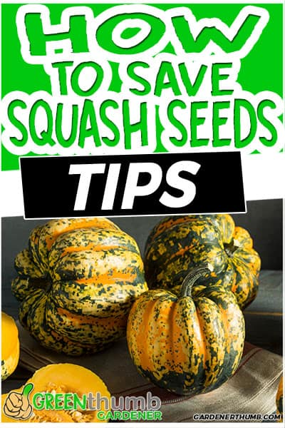 how to save squash seeds tips