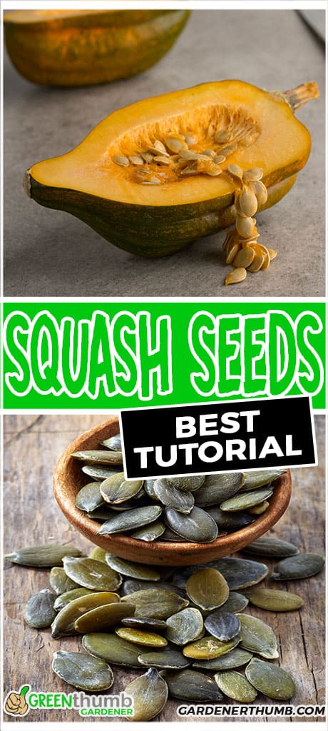 squash seeds best tutorial