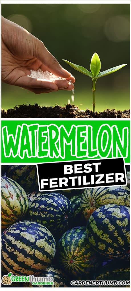 watermelon best fertilizer
