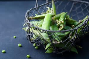 when are green beans ready to pick