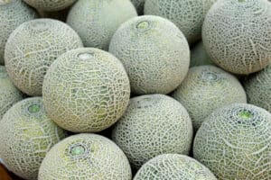 when to pick cantaloupe from the vine