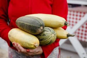 whe to pick zucchini