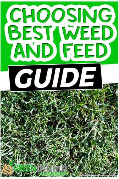choosing best weed and feed guide