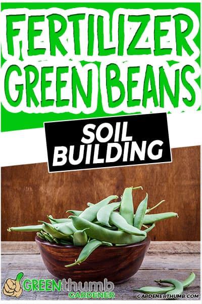 fertilizer green beans soil building