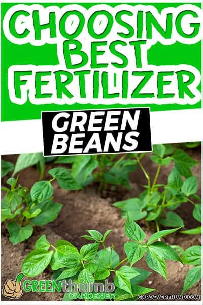 choosing best fertilizer green beans