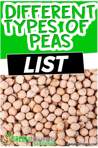 different types of peas list
