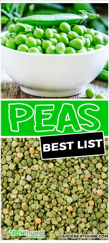 peas best list