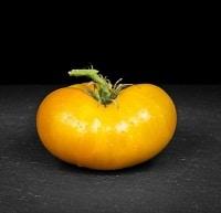 Azoychka Tomato