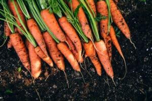 fertilizer for carrots