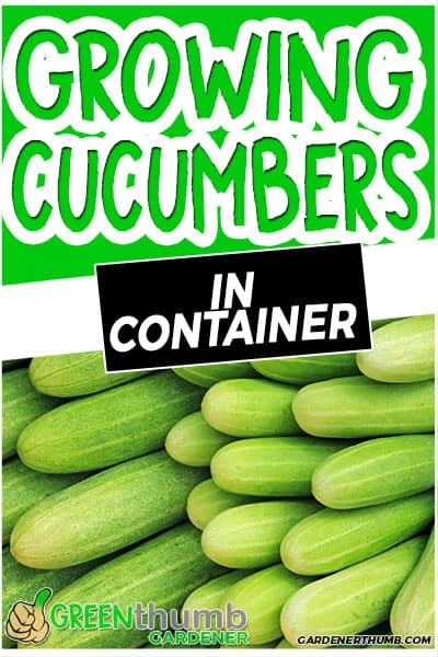growing cucumbers in container