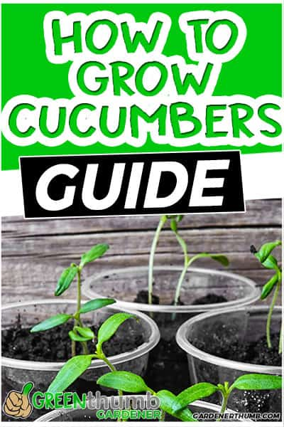 how to grow cucumbers guide