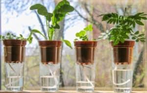 best self watering planters
