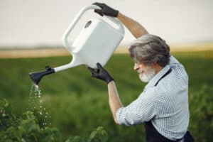 best time to water a garden