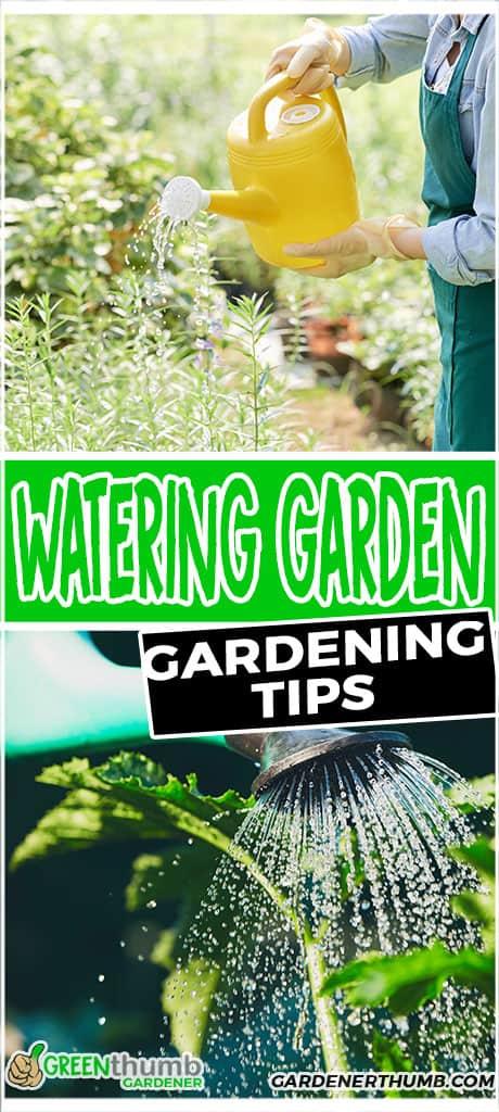 watering garden gardening tips