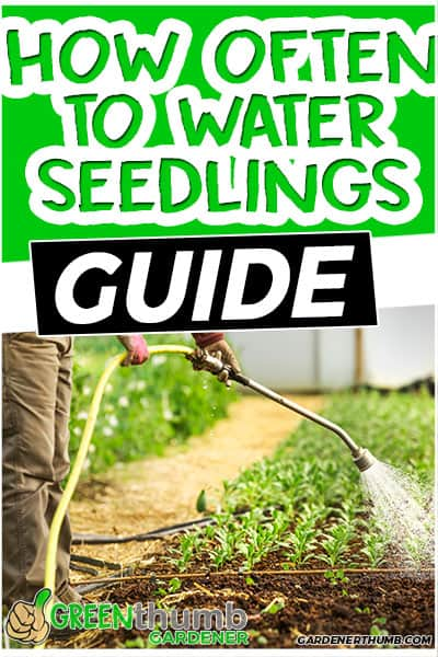how often to water seedlings guide