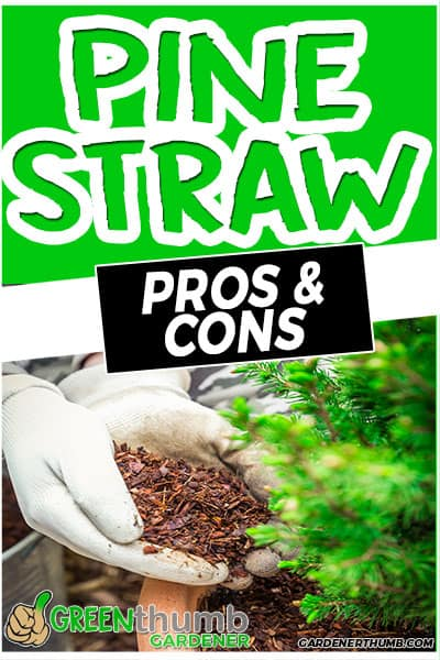 pine straw pros & cons