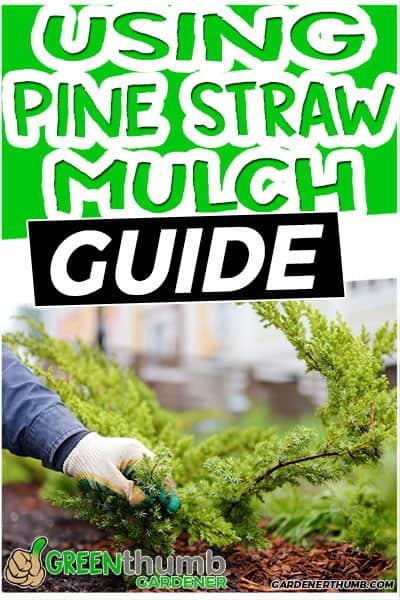 using pone straw mulch guide