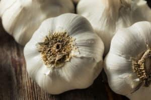 when to fertilize garlic